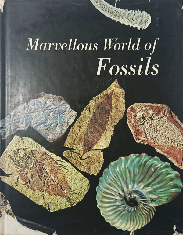 Marvellous World of Fossils by Daniel Pajaud - used book